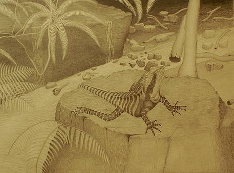 Water Dragon Lizard by Brian Leverton