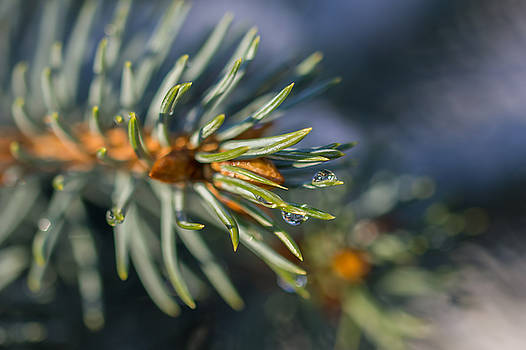 Water drops by Cindy Grundsten
