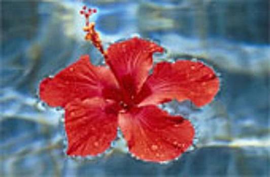 Water Flower  by Robert Martin