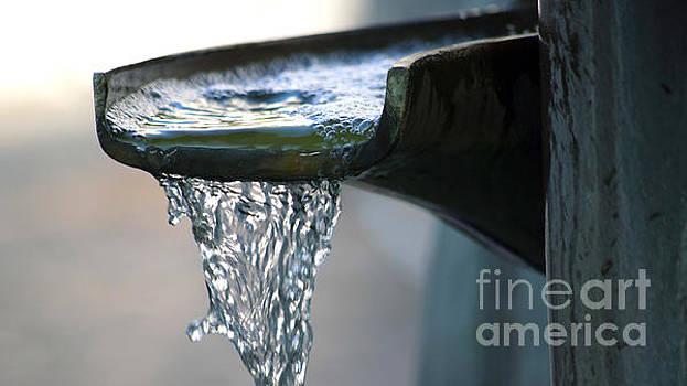 Water in a fountain bowl by Eva-Maria Di Bella