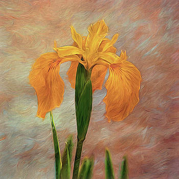 Water Iris - Textured by Susie Peek