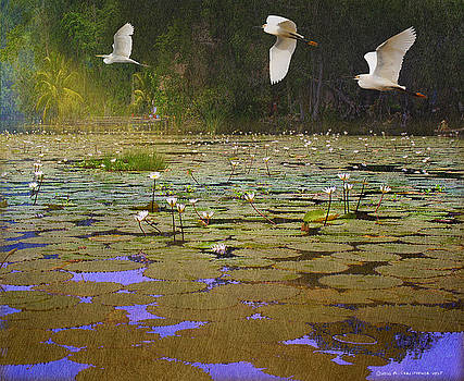 Water Lilies And Egrets by R christopher Vest