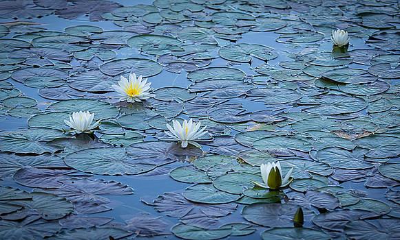 Water Lilies II by Linda Dyer Kennedy