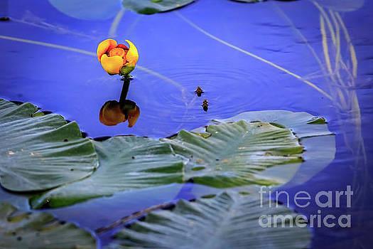 Water Lily at Swan Lake by John Lee