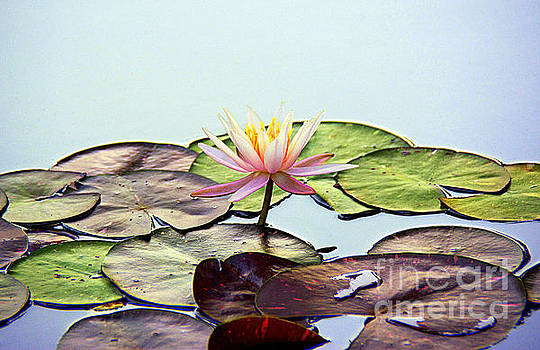 Water Lily Dream by Lisa L Silva