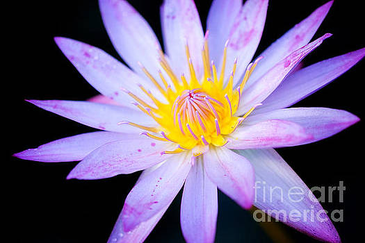 Water Lily by Eyzen M Kim