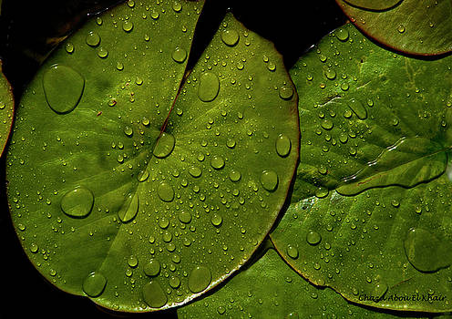 Water lily leaf by Chaza Abou El Khair