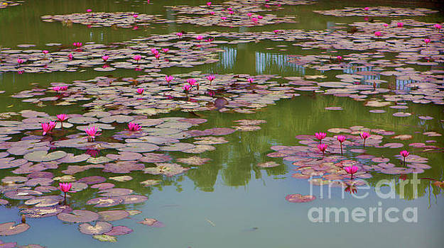 Chuck Kuhn - Water Lily Pond I