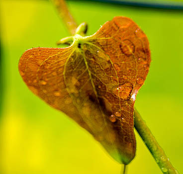 Water on Leaf by Don L Williams