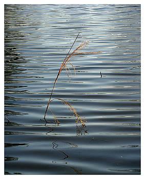 Water Reed by Dawn Davis