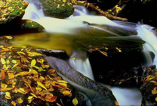 Water Spirit by Rodney Williams