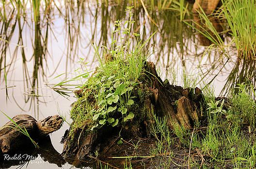 Water Stump by Rachele Morlan