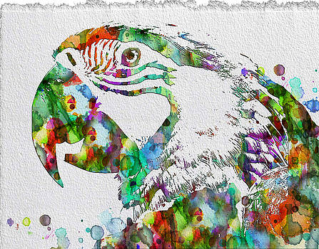 Watercolor Parrot Rainbow Prints Posters by Robert R Splashy Art Abstract Paintings