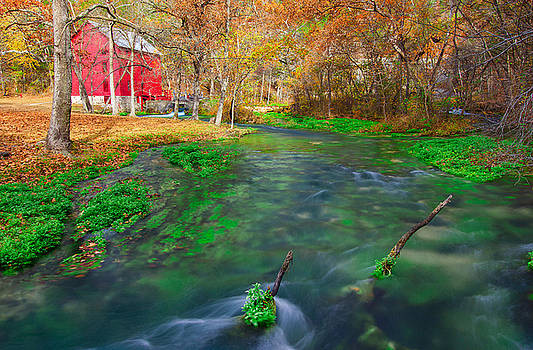 Watercress at Alley Spring  by Jackie Novak