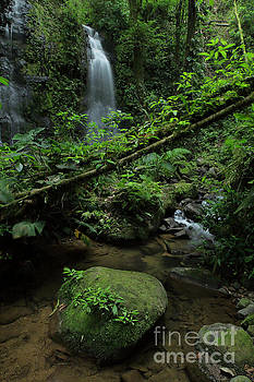 Waterfall inside the rainforest Costa Rica by Juan Carlos Vindas