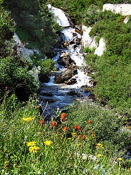 Waterfall with Wildflowers by Alan Socolik