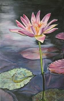 Waterlily reflections by Stephanie Pinnoy