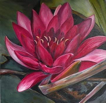 Waterlily2 by Stephanie Pinnoy