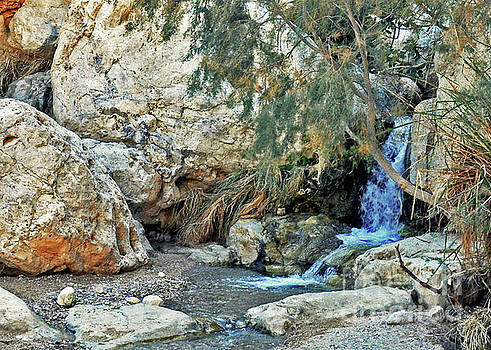 Waters Of Ein Gedi by Lydia Holly
