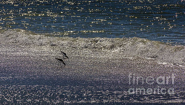 Waves And Sparkling Sand by Marvin Spates