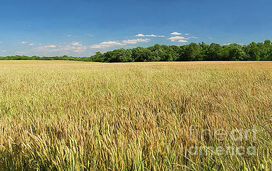 Waves of Grain by Ava Reaves