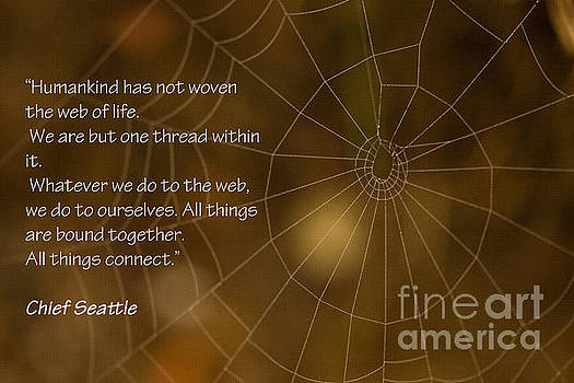 We are One Thread by Liz Alderdice