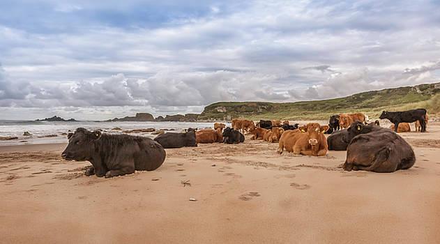 We Moo like to be beside the seaside by Roy McPeak