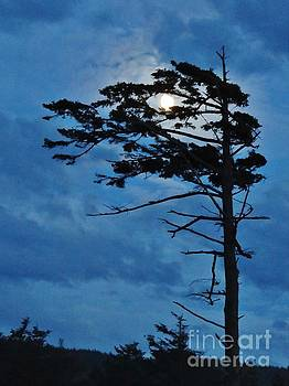 Weathered Moon Tree by Michele Penner