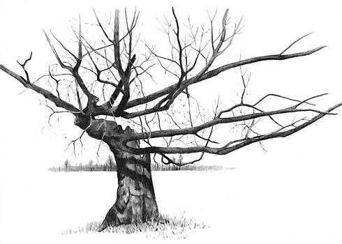 Joyce Geleynse - Weathered Old Tree