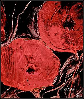 Weathered Poppies by Kathy Othon