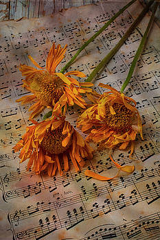 Weathered Sunflowers by Garry Gay
