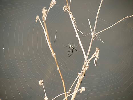 Web of Wonder by Azthet Photography