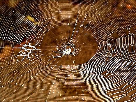 Web by Zodiak Paredes