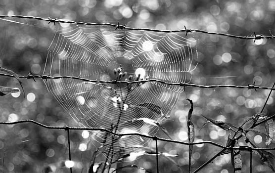 Webs by Tracy Winter