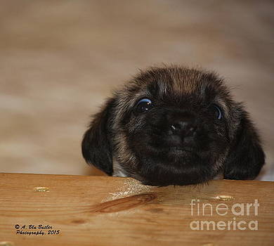 Wee One by Ann Butler