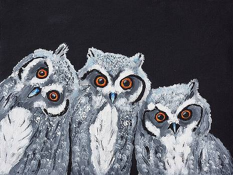 Wee owls by Scott Wilmot