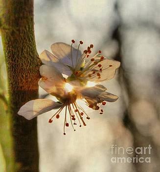 Welcome Spring by Vicki Spindler