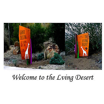 Welcome To The Living Desert by Jay Milo