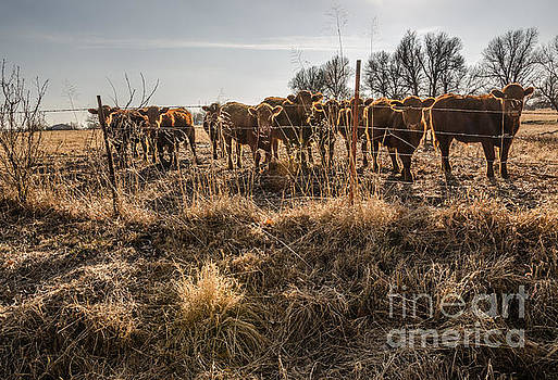 Welcoming Committee by Sue Smith