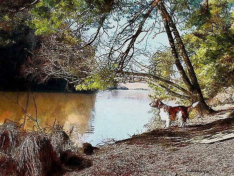 Welsh Springer Spaniel by the River by Kai Saarto