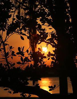 Diane Merkle - West Palm Beach Sunrise