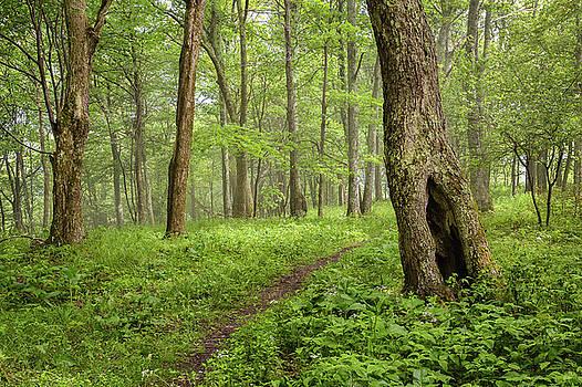 West Virginia Woodland - The Path Taken by Bill Swindaman