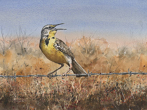 Western Meadowlark by Sam Sidders