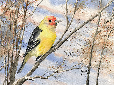 Western Tanager by Sam Sidders
