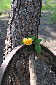 Western Yellow Rose by Jody Lovejoy