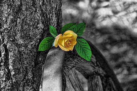 Western Yellow Rose Two Tone by Jody Lovejoy