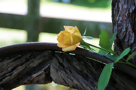 Western Yellow Rose VII by Jody Lovejoy