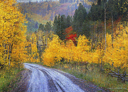 Wet Road - Peak Of Autumn by R christopher Vest