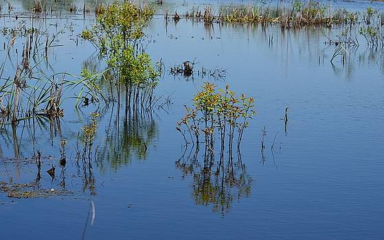 Maria Urso  - Wetland Reflections