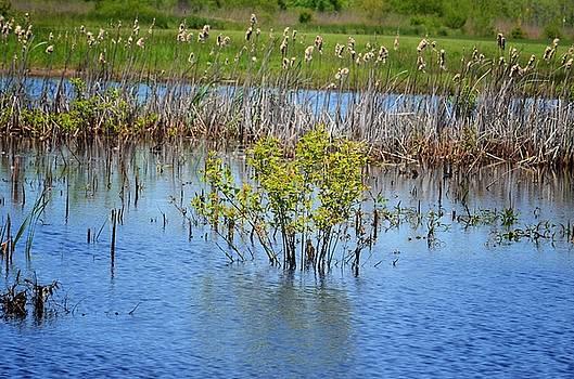 Maria Urso  - Wetlands 15-01